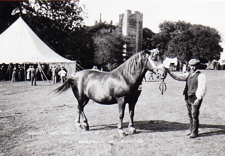 Horse Show 1906