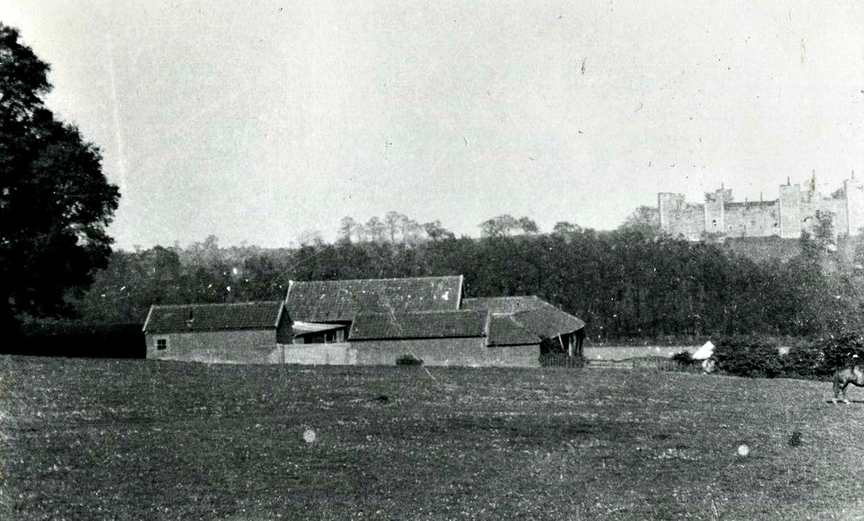 Pigs Meadow